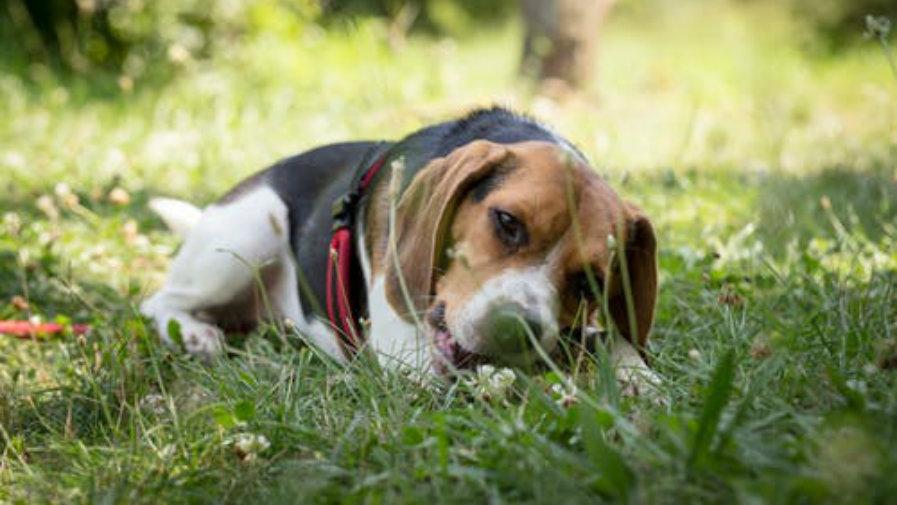 Do 30 kwietnia  2019 roku  należy dokonać zapłaty opłaty za posiadanie psa