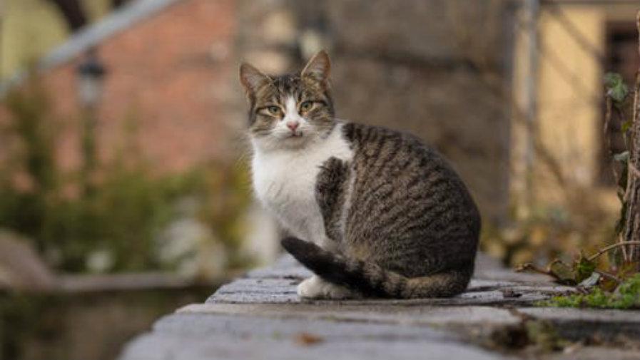 Akcja sterylizacji kotów wolnożyjących